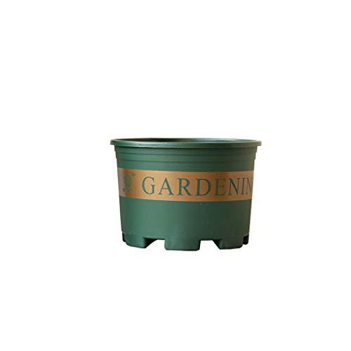 CJH 20cm Chunky Indoor Pot À Fleurs Balcon Viande Bol À La Maison Plantation en Plastique Pot De Fleurs Simple Rond Vert Pot De Fleurs 5
