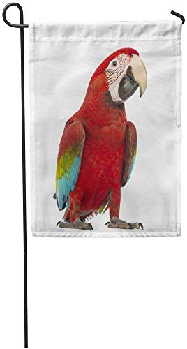 Co5675do Garden Flags Seasonal Flag Funny Flag 12x18 Inches Red Parrot Green Winged Macaw Ara Chloropterus Year Old in Front of Blue Alone Outdoor Decorative House Welcome Garden Flag