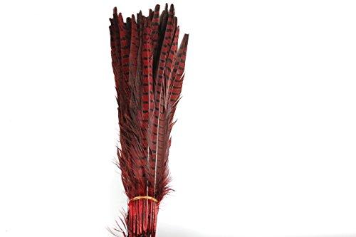 Den Bereichen Großhandel, 20Stück Schöne Fasan Schwanz Federn 35–40cm/35,6–40,6cm rot