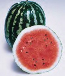 premier-seeds-direct-wml02-water-melon-crimson-sweet-seeds-pack-of-60