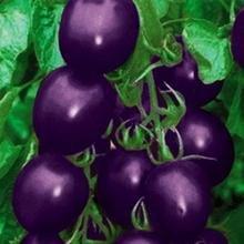 100 pcs Précipité New Plantes d'extérieur Promotion Jardin semences de tomates en pot fruits Bonsai Balcon de semences de légumes 6
