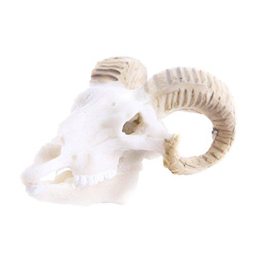 Gazechimp Résine Décoration pour Reptile Vivarium Crâne D'animals Fish Tank Reptile Terrarium Ornement - Crâne de chèvre