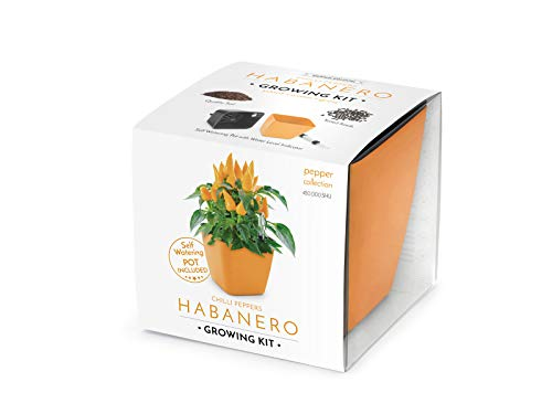 Domestico Habanero Anbau-Kit, Chilli pepper Growing Kit (Orange), All-In-One Set – Selbstbewässerungstopf 13x13 cm, Samen, frisches Substrat mit Nährstoffen