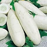Cucumber 'Holland White' 10 Seeds - Novelty, Crispy, Top scores for taste