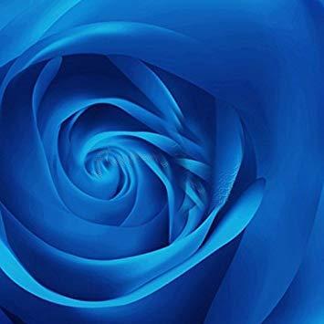 Shopvise Bonsai-Samen Green'S Gardens Seltenes Erbstück 20 Erbstück-Juwel Rose Bush Flower Stifling Hochwertiger Schmuckliebhaber s Very Beautiful