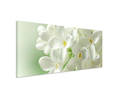 Panorama Fotoleinwand 120x40cm Naturfotografie – Weiße Blumen mit pastellgrünem Hintergrund auf Leinwand exklusives Wandbild moderne Fotografie für ihre Wand in vielen Größen