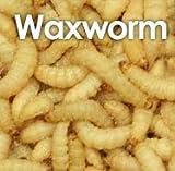 50 waxworms (15g)