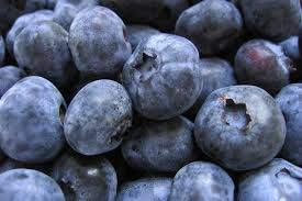 Blueberry Goldtraube large berries reliable and heavy cropping mid season variety Vaccinium corymbosum 9cm FREE DELIVERY