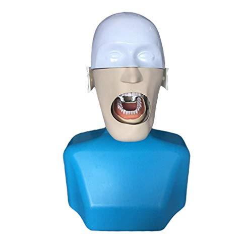 Tcbz Dummykopf Modell Simulierte Schulterkopf Form Dentalschule Stomatologie Lehrmodell für Lehrer (Ski Lehrer Kostüm)