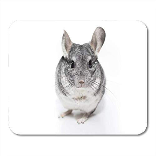 HOTNING Gaming Mauspads, Gaming Mouse Pad Adult Black and White Chinchilla Amusing Angry Animal Background Closeup 11.8
