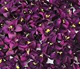 Zantec faszinierenden 8cm Kunstblumen, Cymbidium Orchidee, Blume für Jäten und Party Home? Dark Purple 100?