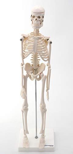 Zoom IMG-1 cranstein piccolo modello anatomico mini