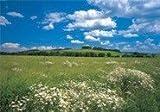 Fototapete Meadow - Größe 368 x 254 cm