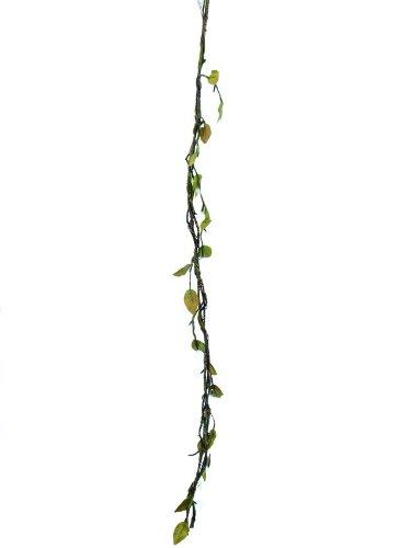 OBI Normalwachsend (bis 40 cm)