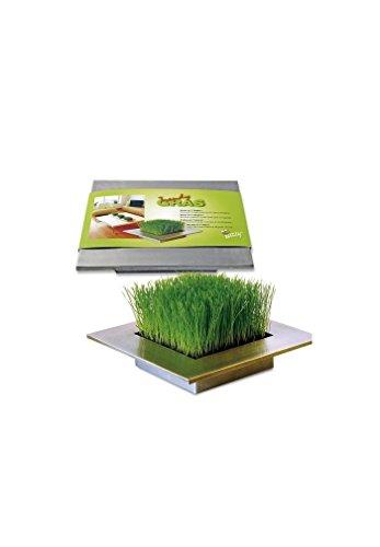 Radis et capucine - Carré d'herbe déco