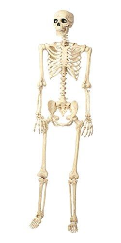 Seasons Jahreszeiten Menschliches Skelett Skelett Katze 5'