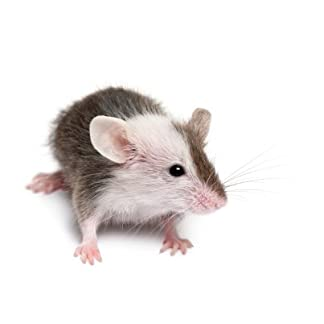 Reptile Centre Frozen Mice Small 10-15g, Barcode 10-pack 7