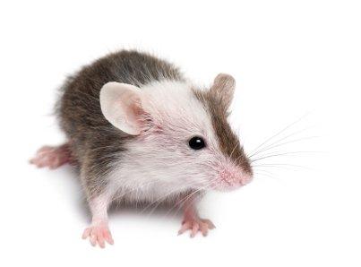 Frozen-Mice-Fuzzies-10-pack-4-7g