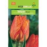 Bulbo Tulipán Darwin Amarillo con Estrías