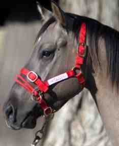 Monty Roberts Dually Headcollar (Small - Red)