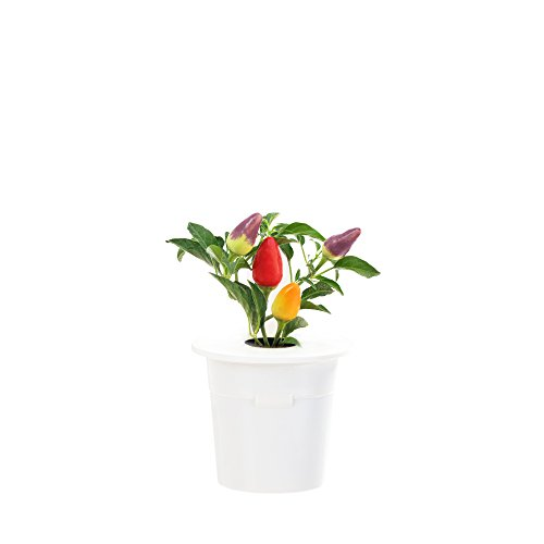 Click & Grow Chili Pepper Refill 3-Pack for Smart Herb Garden