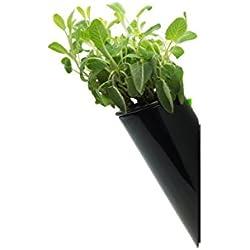 cofradesign ZOE - vaso da parete autoirrigante per piante ornamentali, piante che depurano l'aria e erbe aromatiche. Colore nero