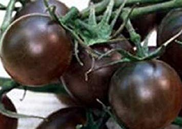 Potseed Keimfutter: Tomate Black Cherry 500 Seeds VAR. Cherry Tomaten Samen Samen