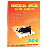 Zollyss Rat Glue Traps Mouse Terminator Powerful Pest Control Rat Killer Repeller Harmless Insect Traps for Home Décor(Set of 3 Pc)