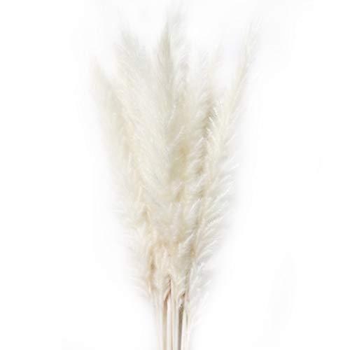 15 Stück natürliche getrocknete kleine Pampasgras, Reed Plume, Phragmites Communis, Hochzeit Blumenstrauß, 20 Zoll groß Wohnkultur(White)