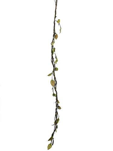 OBI Pflanzabstand ca. 20 - 30 cm