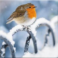 MED1149 luxuriöse Weihnachtskarten, Motiv: Rotkehlchen auf Geländer, 10 Stück
