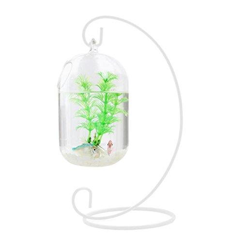 WINOMO 15cm transparent Anhänger ausgesetzt Tank Fische Flasche aus Glas Infusion Vase Aquarium Pflanze Vase für die Dekoration des Hauses (nur mit Schale aus Glas) Glas Infusion Gläser