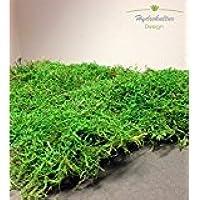 Terrario Musgo molido para reptiles (1 capa) Substrato Decoración del estera de musgo Placas natural