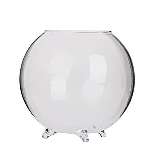 Homyl Transparente Kugel Vase Glasvase Dekovase für Pflanzen Blumen, Haus Dekoration