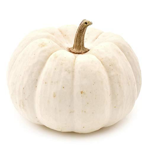 Beautytalk-Garten 20 Stück Kürbis Saat- Riesen Kürbis gelber Zentner Selten Bunte Pumpkin Samemn Gemüse garten Cinderella Kürbis