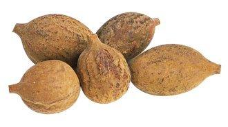 Urancia® 100% pure Organic Baheda Terminalia Belerica Beleric Myrobalan Fresh dried fruit 450gm