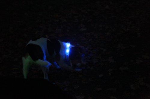 LumiVision Akku Leuchthalsband 40 cm Wiederaufladbares, wasserdichtes LED Leuchthalsband für Hunde blau - 4