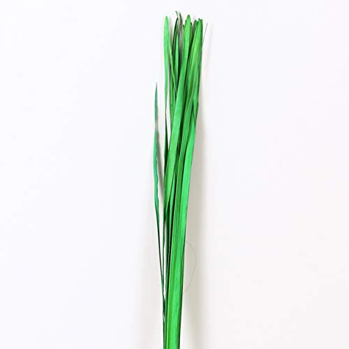 Leewadee Dekobündel für Bodenvasen Trockengesteck Dekogras Dekozweige, 120 cm, Palmblatt, grün