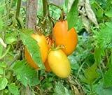 Orange Banana Tomate