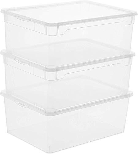 Rotho 3-er Set Clear Box Man Shoe Aufbewahrungsboxen 10 l mit Deckel, Kunststoff (PP), transparent, 10 Liter (36,5 x 26,5 x 14 cm)