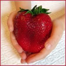 Riesen Erdbeere 10 Samen