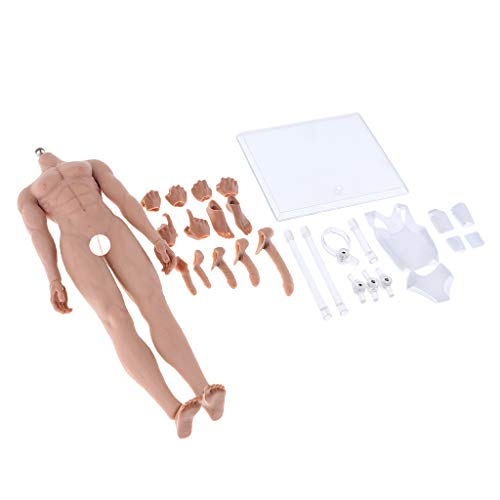 Baoblaze 1/6 Maßstab Stahl Skelett Muskel Muskulöse Nackte Männliche Actionfigur Körper - Weizen, 29 cm