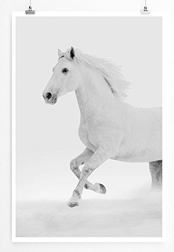 Weißes Ambiente Ist Die Kunst (EAU ZONE Home Bild - Tierbilder - Weißes Pferd im Schnee - Poster Fotodruck in höchster Qualität)