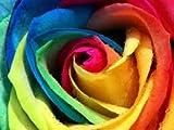 100 stücke Samen Regenbogen Rose ge mehrfarbig