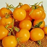 SeeKay Tomato 'Golden Sunrise' 25 seeds