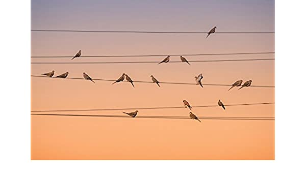 JP London JPL and John Fan Present Music of Light Birds on a Wire Dusk 36in x 24in Poster Mural SPMUR1X846789 Fully Removable Peel and Stick Wall Art
