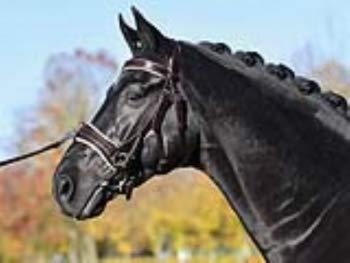 Busse Kappzaum FIT PRO, Pony, braun(Creme) -