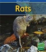 Rats (What's Awake?)