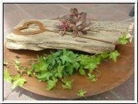 Patine Bol rond D50 cm Métal Coque pour plantes rigide de7311