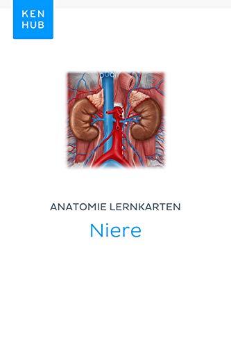 Anatomie Lernkarten: Niere: Lerne alle Organe und Arterien unterwegs ...